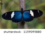 a beautiful blue butterfly... | Shutterstock . vector #1159095880