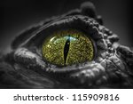 Close Up Of Crocodile's Eye