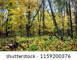 abandoned old park with a pond  ... | Shutterstock . vector #1159200376