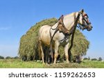 transportation of hay by a cart ... | Shutterstock . vector #1159262653