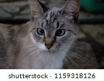 Cross Eyed Look Cat