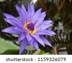 closeup photograph of a... | Shutterstock . vector #1159326079