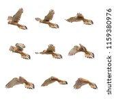 set of common kestrel  falco... | Shutterstock . vector #1159380976