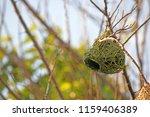 New Green Weaver's Nest Under...