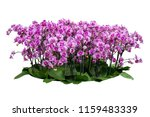 flower orchids plant bush tree... | Shutterstock . vector #1159483339