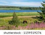 view in northern sweden across... | Shutterstock . vector #1159519276