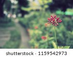 flowers used for decorating the ... | Shutterstock . vector #1159542973