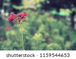 flowers used for decorating the ... | Shutterstock . vector #1159544653