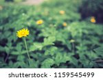 flowers used for decorating the ... | Shutterstock . vector #1159545499