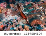 a camouflaged robust ghost... | Shutterstock . vector #1159604809
