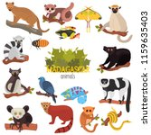 madagascar unique animals color ... | Shutterstock .eps vector #1159635403