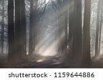 Light Rays Through Trees In...