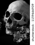 black and white skull with... | Shutterstock . vector #1159666939