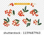 berries rowan  realistic on... | Shutterstock .eps vector #1159687963