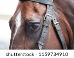 Detail Of Sad Looking Horse
