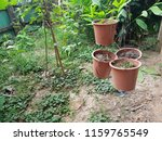 flowerpots are hanging | Shutterstock . vector #1159765549
