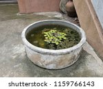 old lotus pond | Shutterstock . vector #1159766143