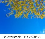 Soft Yellow Autumn Leaves Unde...