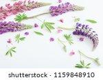 lupine flowers on white... | Shutterstock . vector #1159848910