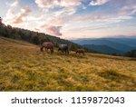 romantic nature scene  horses... | Shutterstock . vector #1159872043