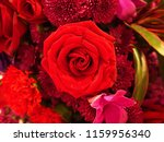 Small photo of A red rose signifies love at first sight and convey an outright sentiment