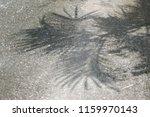 shadow  tree  on  the  corridor. | Shutterstock . vector #1159970143