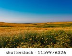 spring yellow daisy flowers and ... | Shutterstock . vector #1159976326