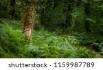 forest woods of wales on a wet... | Shutterstock . vector #1159987789