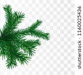fir branch isolated. vector...   Shutterstock .eps vector #1160025436