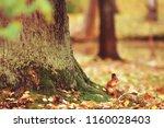 squirrel in autumn   autumn... | Shutterstock . vector #1160028403