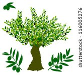olive tree   Shutterstock .eps vector #116005276