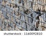 close up view of a steel gabion ... | Shutterstock . vector #1160092810