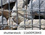 close up view of a steel gabion ... | Shutterstock . vector #1160092843