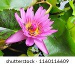 beautiful pink color blooming... | Shutterstock . vector #1160116609