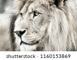 Stock photo lion portait lion in white lights photo of the animal world portrait of a dominant predator 1160153869