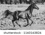 running horse in summer ... | Shutterstock . vector #1160163826