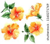 watercolor orange naranja... | Shutterstock . vector #1160271769