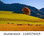 amazing autumn rural landscape... | Shutterstock . vector #1160276419
