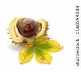 Fruit Of The Horse Chestnut On...