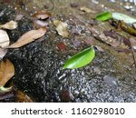 close up of water flowing over... | Shutterstock . vector #1160298010