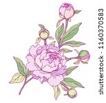 ink  pencil  vector peonies... | Shutterstock .eps vector #1160370583