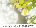 view picture background leaves... | Shutterstock . vector #1160373676