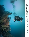 diver reviewing a healthy reef | Shutterstock . vector #116037853