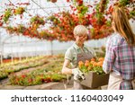 portrait of senior and young... | Shutterstock . vector #1160403049
