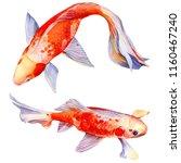 Orange Carp  Beautiful Fish On...