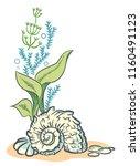 sea shell algae beach hand... | Shutterstock . vector #1160491123