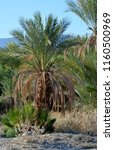 palm tree  cactus  flowers     Shutterstock . vector #1160500969