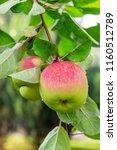 close up organic bio red green... | Shutterstock . vector #1160512789