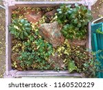 plants in a white wooden box ... | Shutterstock . vector #1160520229