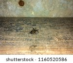 a close up of black cricket on... | Shutterstock . vector #1160520586